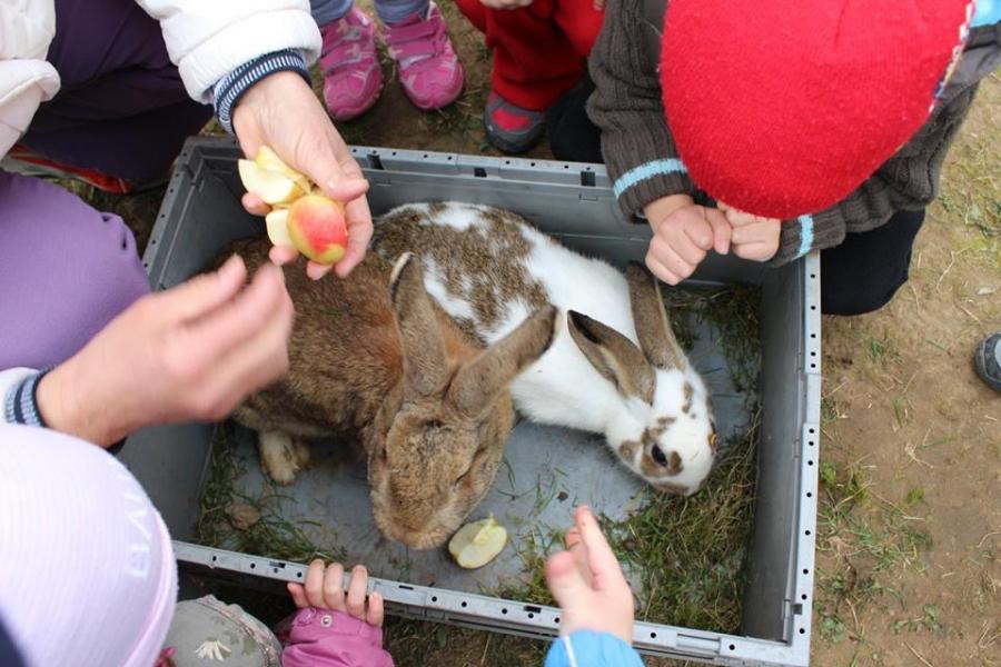 Húsvéti állatsimogató