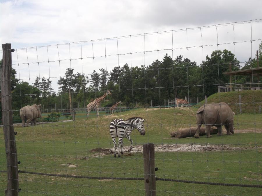 Állatkerti séta a Mini csoporttal